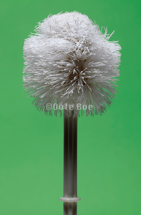 well used white plastic toilet brush