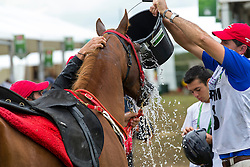 Robin Cornely, (FRA), Rusty James<br /> Alltech FEI World Equestrian Games™ 2014 - Normandy, France.<br /> © Hippo Foto Team - Leanjo de Koster<br /> 25/06/14