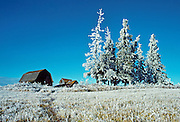 Homestead and trees covered in hoarfrost<br /> Stony Plain<br /> Alberta<br /> Canada