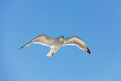 Low angle view of seagull flying in sky, England, UK