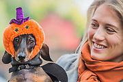 Loki, a dachshund with Cara - A charity Halloween Dog Walk and Fancy Dress Show organised by All Dogs Matter at the Spaniards Inn, Hampstead. London 29 Oct 2017.