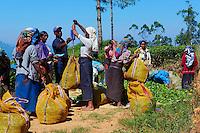 Sri Lanka, province du centre, Nuwara Eliya, plantations de thé de Ceylan, cueillette du thé, les cueilleuses tamoules attendent pour faire peser leur récolte du jour // Sri Lanka, Ceylon, Central Province, Nuwara Eliya, tea plantation in the Highlands, Tamil women tea pickers wait to get their tea leaves weighted to make their daily targets