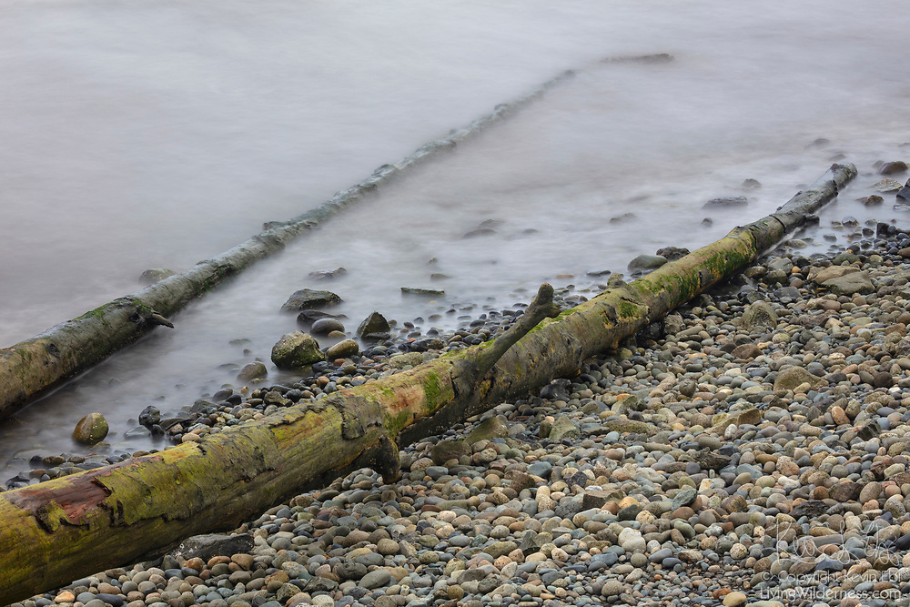 The remnants of two large trunks from a fallen tree reach into Puget Sound, not far from Pigeon Creek, Everett, Washington. An 8-second exposure blurs the motion of the Puget Sound waves.