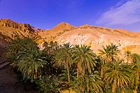 Oasis of Chebika, Tunisia