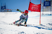 Francis Piche Invitational Giant Slalom U14 girls first run with Gunstock Ski Club.  <br /> ©2017 Karen Bobotas Photographer