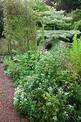 Alice's border at Glebe Cottage in August