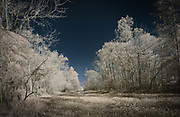 Lake Martin Faux Color Infrared