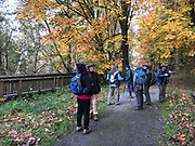 Looking for birds in the wet woods at Nisqually National Wildlife Refuge. Photo by Donna J. Hahn.