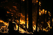 A wildfire chews through fuel in Conconully, threatening houses and prompting a level three evacuation Friday August 21, 2015.<br /> <br /> Bettina Hansen / The Seattle Times