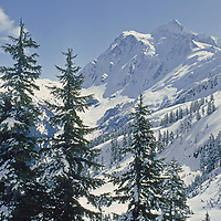 Mount Shuksan, in North Cascades National Park (background).