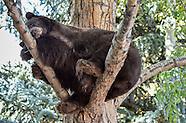 Aspen Bears