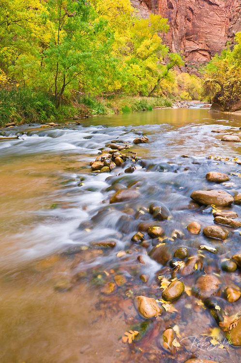 The Virgin River and fall color in Zion Canyon, Zion National Park, Utah
