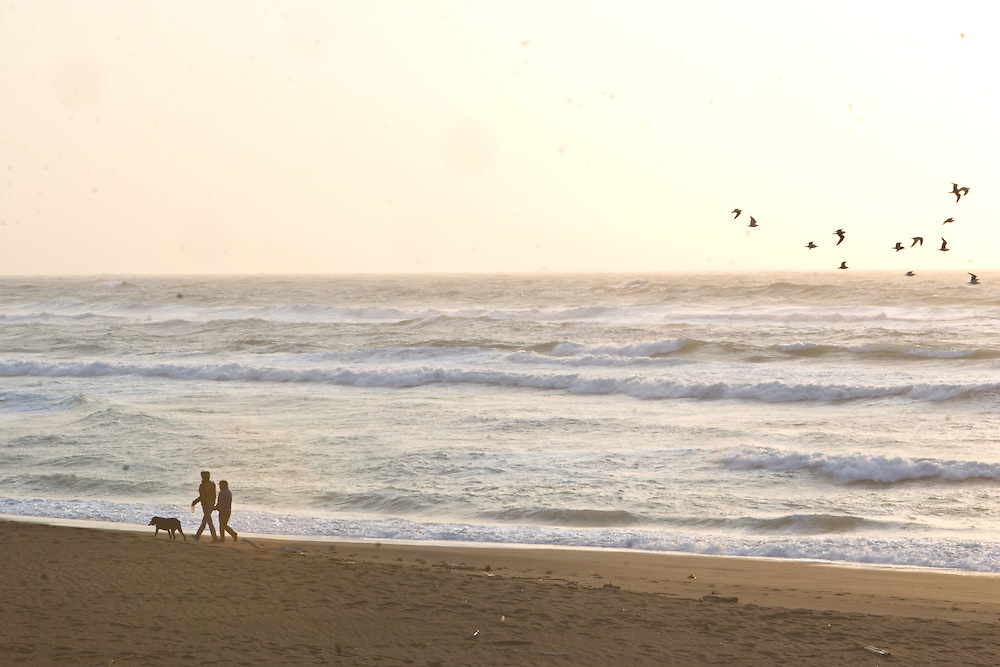 Couple walking dog along a sunset beach with a flock of birds in the sky, ocean waves in the background in California, United States.