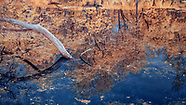 Sycamores, Dry Creek