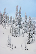 Trees stand covered in heavy snow on Sourdough Ridge, North Cascades National Park, Washington.