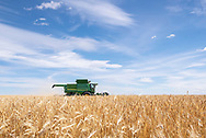Photo Randy Vanderveen<br /> Grande Prairie, Alberta<br /> 2020-09-03<br /> The 2020 harvest has begun in earnest in the South Peace as farmers, like this one combining barley southwest of Sexsmith, work on getting the crops in the bin. While there is a chance of rain and cool temperatures this weekend, the next week and half looks pretty good for getting a good start.