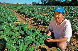Roberto Okubo, 41 anos, passou a infância em Gravataí, tendo se mudado em 1979 com a famÌlia para a Colônia Japonesa de Itapuã ao sul de Porto Alegre. O cultivo de verduras é a principal atividade dos Okubo e das outras 10 famílias que atualmente residem no local. Roberto é o atual presidente da Associação Esportiva Recreativa Japonesa de Itapuã (Aserji) e é japonês puro. Seus pais, Kazuhiro e Sumiko, que moram com ele em Itapuã são nascidos no Japão, tendo vindo da província de Kumamoto para o Brasil em 1960. FOTO: Itamar Aguiar/Preview.com