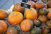 Pumpkin displays at the Naional Botanic Garden celebrating Halloween,  Saturday October 24th 2015, Glasnevin, Dublin, Ireland
