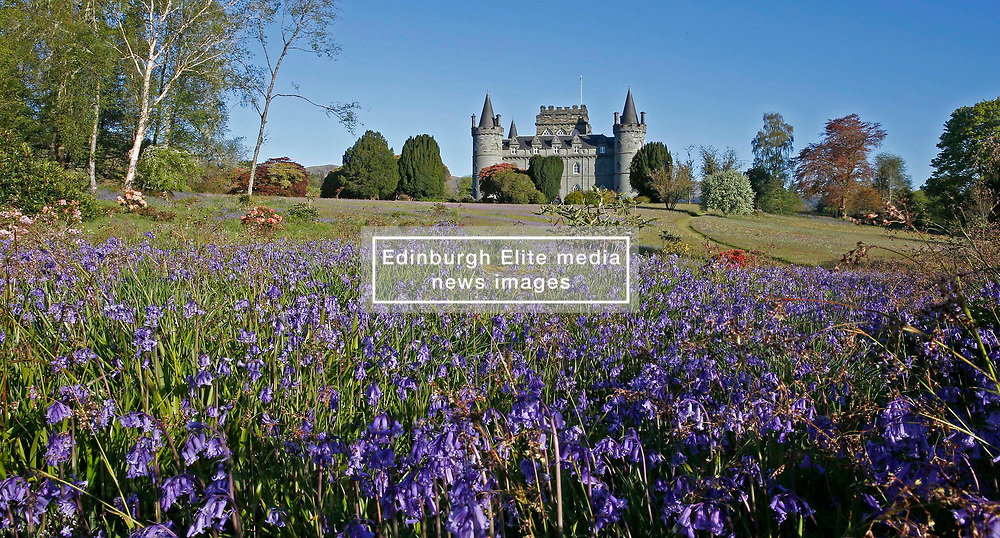 Bluebells in the grounds of Inveraray Castle  on a beautiful spring morning. Inveraray Castle has been the seat of the Dukes of Argyll, chiefs of Clan Campbell, since the 18th century.......... <br /> (c) Stephen Lawson | Edinburgh Elite media