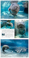 "Days Japan Magazine Article - photographs and text by Carol Grant. Entitled ""Hello Manatees!"""