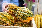 Winter Squash, Cucurbita pepo<br /> Showcase: 'Starry Night' acorn squash<br /> Breeder: Lindsay Wyatt, Johnny's Selected Seeds Chef: Aaron Adams, Fermenter