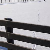 Winter Photos @ Tara Hills Stud 2010