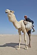 Child camel herder in Iraq