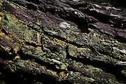 Sao Goncalo do Rio Preto_MG, Brasil...Parque Estadual do Rio Preto, em Sao Goncalo do Rio Preto, Minas Gerais...The Rio Preto State Park, in Sao Goncalo do Rio Preto, Minas Gerais...Foto: LEO DRUMOND / NITRO