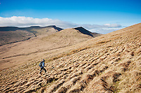 Female hiker hiking towards Fan Y Big, Brecon Beacons national park, Wales