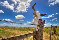 Caveira de bovino fixada na cerca de uma fazenda no Alegrete. Lavradores de todas as partes, do Norte e do Sul, acreditam que a caveira de boi defende a plantação contra as pragas, as intempéries, o mau-olhado, enfim, afugenta todas as ameaças contra a lavoura. FOTO: Jefferson Bernardes/Preview.com