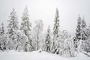 View of the snowy Winter landscape of trees on 16th February 2020 near Levi in Finnish Lapland. Levi is a winter sports paradise with 43 ski slopes, 230 km of cross-country ski trails, 20km of Winter hiking routes and 886 km of snowmobile trails.
