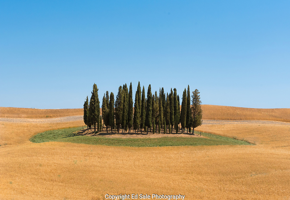 A group of Cypress trees stand in the middle of a harvested wheat field in the Val d'Orcia in Tuscany, Italy.