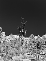 https://Duncan.co/dead-tree-and-dark-sky