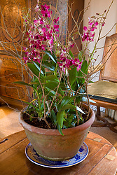 Orchid in a terracotta pot
