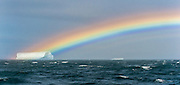 The end of a rainbow touches a tabular iceberg with a Black-browed Albatross flying by, South Georgia Island, South Atlantic Ocean