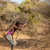The Hadzabe are a tribe of hunter gatherers numbering as few as 1500 members, of those perhaps just 300 still survive year round entirely from their traditional ways of obtaining food. Many supplement the meagre results of their hunting and foraging during the dry season when game is sparse by demonstrating their way of life to visiting tourists. The Hadzabe's way of life is thought to have remained largely unchanged for the past 10,000 years but is now in peril as the modern world encroaches and corrupts their non materialism and self sufficiency. <br /> <br /> Lake Eyasi Region, Tanzania. September 2019.