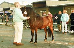 , 52 - Pferdestammbuch 12. - 14.02.1999, 071 - Mühlenmoor Roger⼱