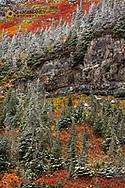 Fresh snowfall on autumn colors in Glacier National Park, Montana, USA