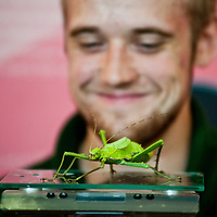London, UK - 21 August 2013: zookeeper Jeff weighs and measures a stick insect called Jungle Nymph (4.5g)  during the ZSL London Zoo's annual animal weigh-in. From big cats to tiny frogs, keepers spend hours each year recording every animal's vital statistics, enabling them to keep a close check on their overall well-being.