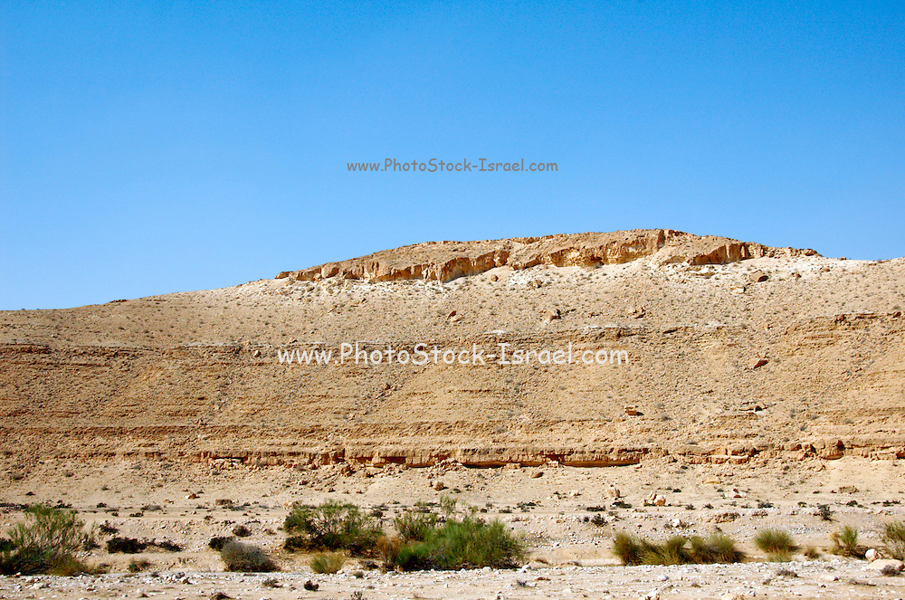 Israel, northern plains Negev desert, general landscape and view with Retama raetam plants in the foreground