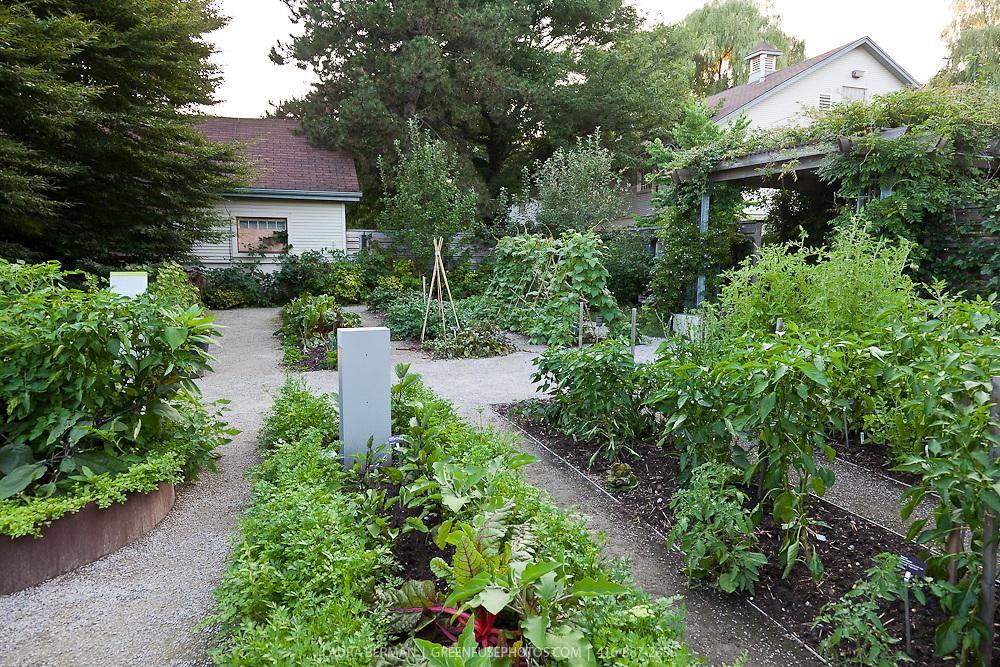 A full kitchen garden in mid-summer.