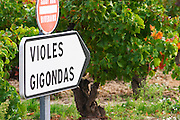 Road sign in front of the vineyards saying Gigondas and Violes. An old vine in the background.