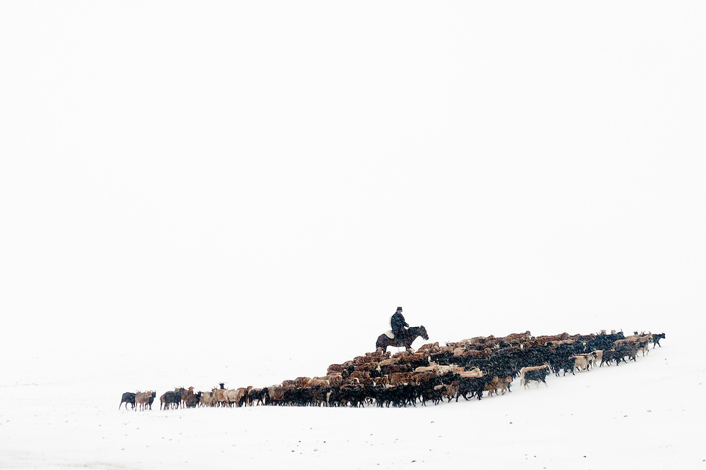 A man tends to his herd of goats in Bayan-Ölgii Province, while watching a Mongol Rally convoy pass through the western-most province in Mongolia.