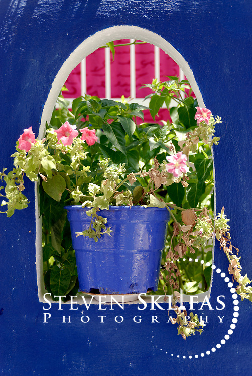 Samos. Greece. Colourful flowers in a purple pot plant sitting within an arch window in the seaside town of Pythagorio. The town is a UNESCO Cultural World Heritage Site and is named after the great philosopher Pythaogaras who was born here in 580 BC.