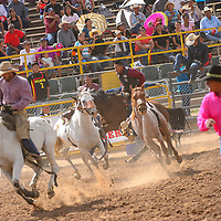 090713  Adron Gardner/Independent<br /> <br /> Chaos reigns during the wild horse race to conclude the Saturday Navajo Nation Fair rodeo in Window Rock Saturday.