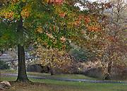 Binney Park in the Rain