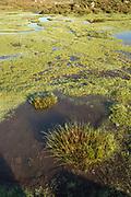 High angle view of pond on plateau, Plateau de Coscione, Corsica, France