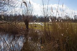 Lepelaarsplassen, Almere Buiten, Flevoland, Netherlands
