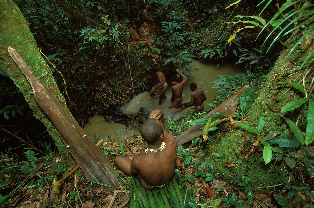 A Kombai man with a dog´s tooth necklace watches three other men empty a dammed part of a creek in Papua, Indonesia, a fishing method allowing them to catch the fish living in the creek. September 2000.  The men use woody shafts of sago leafs as bailers. One such bailer is leaning against the tree to the left. A stone axe is lying on the ground beside it. On the other side of the creek three women are waiting. The Kombai are a so-called treehouse people who build their homes high up in the trees.