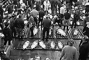 In the Island country of JAPAN, fish and seafood are the central focus of their culinary routine. The Tsukiji  Fish Markets in TOKYO process around 2,700 tons of fish a day handling more than 400 different types of seafood. The bustling marketplace comes to life in the early hours of the morning when the fish is inspected before the auctions start at around 5.30 a.m. Once bought the seafood is taken by the wholesalers back to their stalls in the markets, as well as heading off to restaurants and retailers .Almost all the fish eaten in TOKYO come from these markets. Plans to relocate the markets by 2012 are under way, a move prompted by the ageing buildings of the Tsukiji markets and the larger area of the new site at Toyosu.<br /> <br /> PIXS TAKEN......021221 (21ST DECEMBER 2002)<br /> Pic shows...Authorized buyers and middlemen examine the quality of the goods carefully and determine the price they will bid prior to the start of the auction.